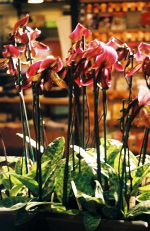 Visual Merchandising 'Gardens' Retail Shop, Austin, Texas Orchids