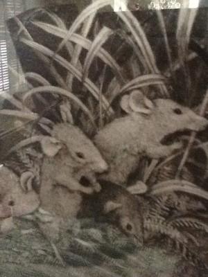 Fresh Configurations Longridge Lookbook Ford Ruthling Engraving of Mice